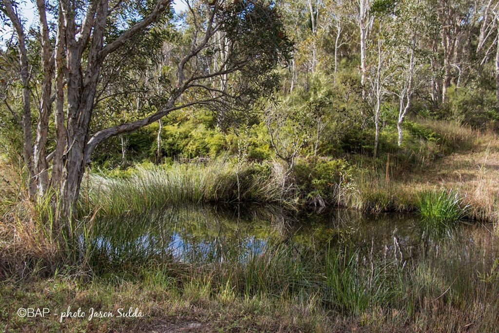 Carland Creek in Cooloola National Park ©BAP, photo J. Sulda
