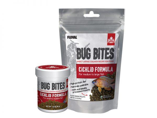 Bug Bites Ciclid Family