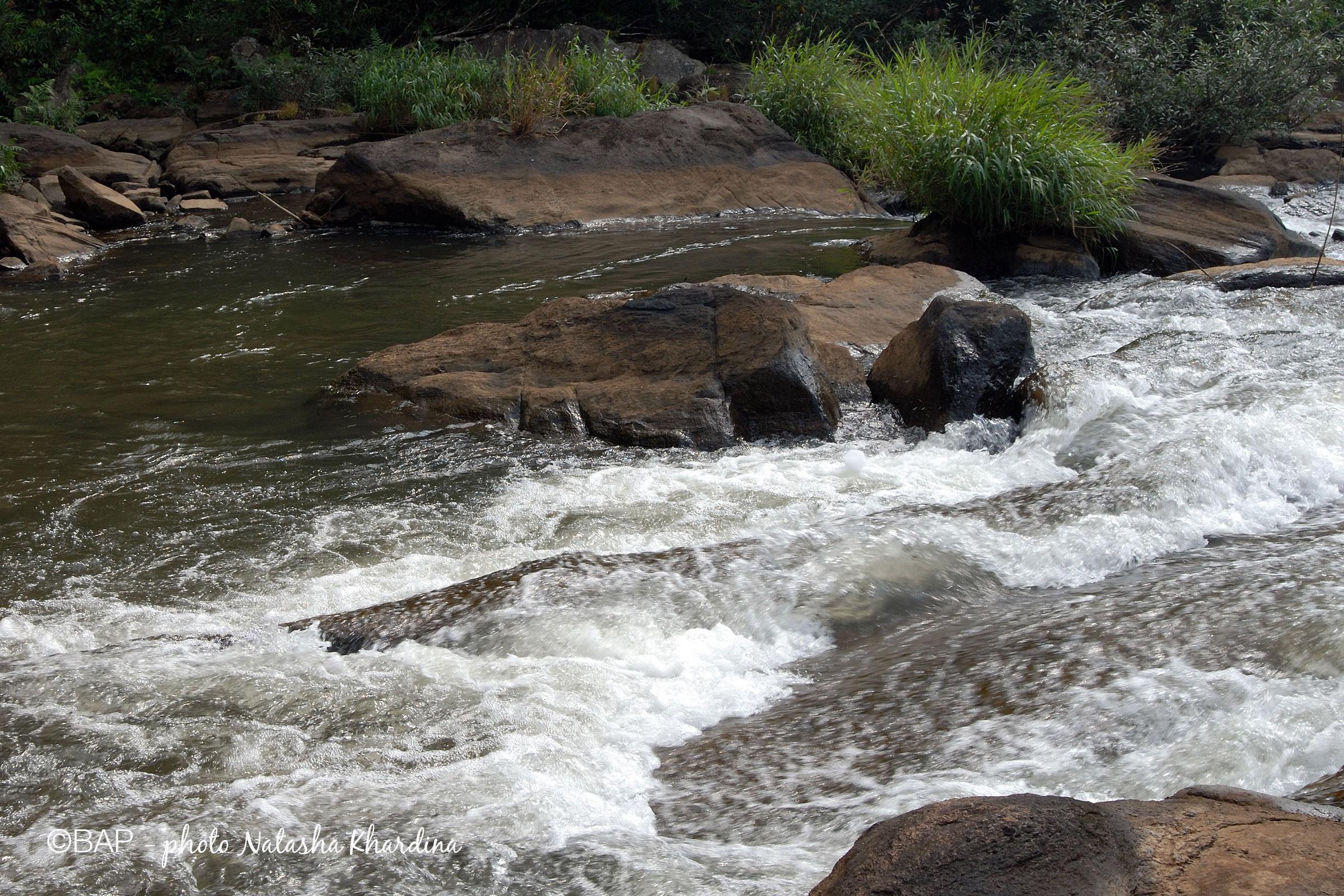 Chalakkudy River, near Athirappilly Falls. ©BAP, photo N.Khardina