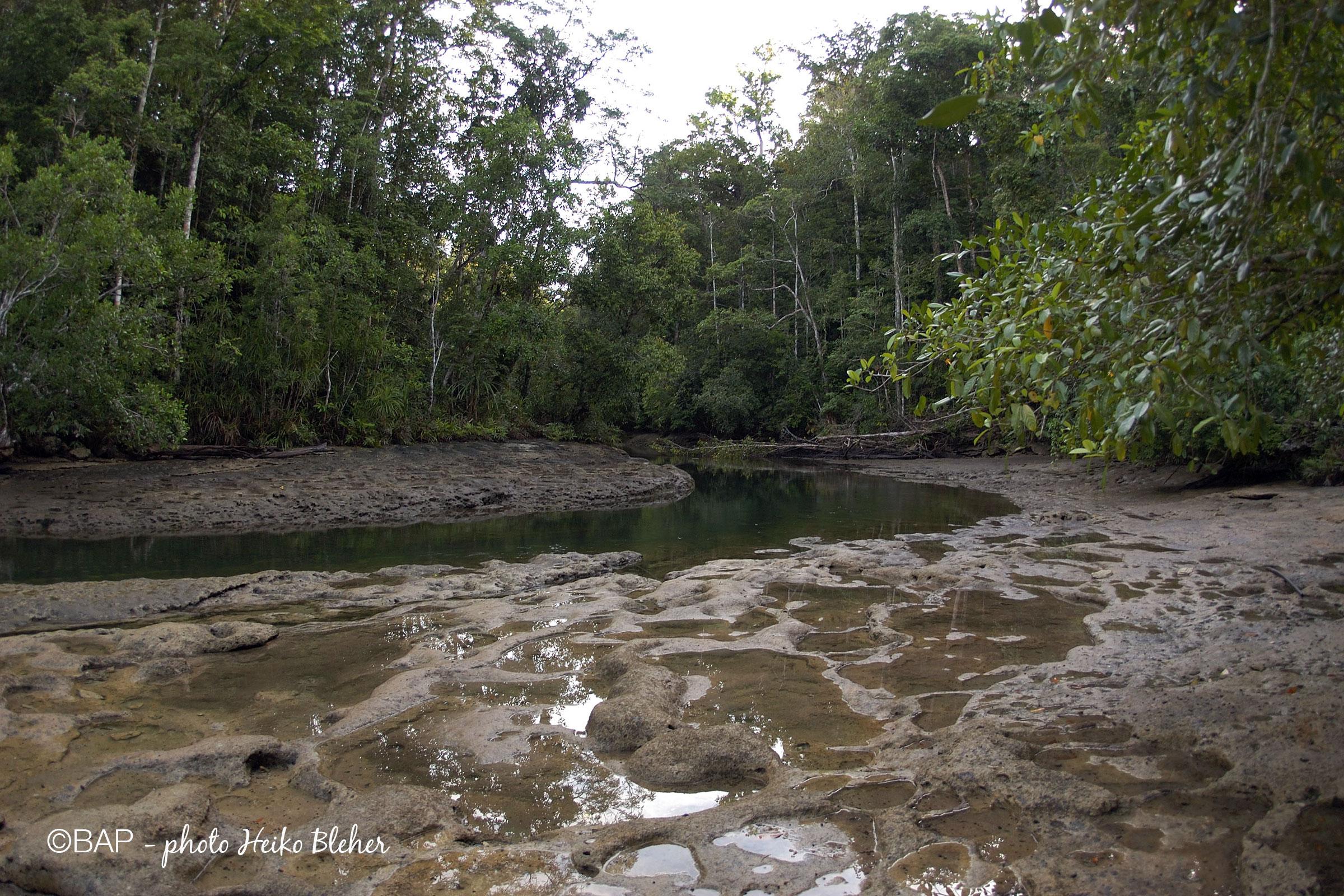 Sungai Malawatu, Aru Archipelago, Indonesia. Photo by Heiko Bleher