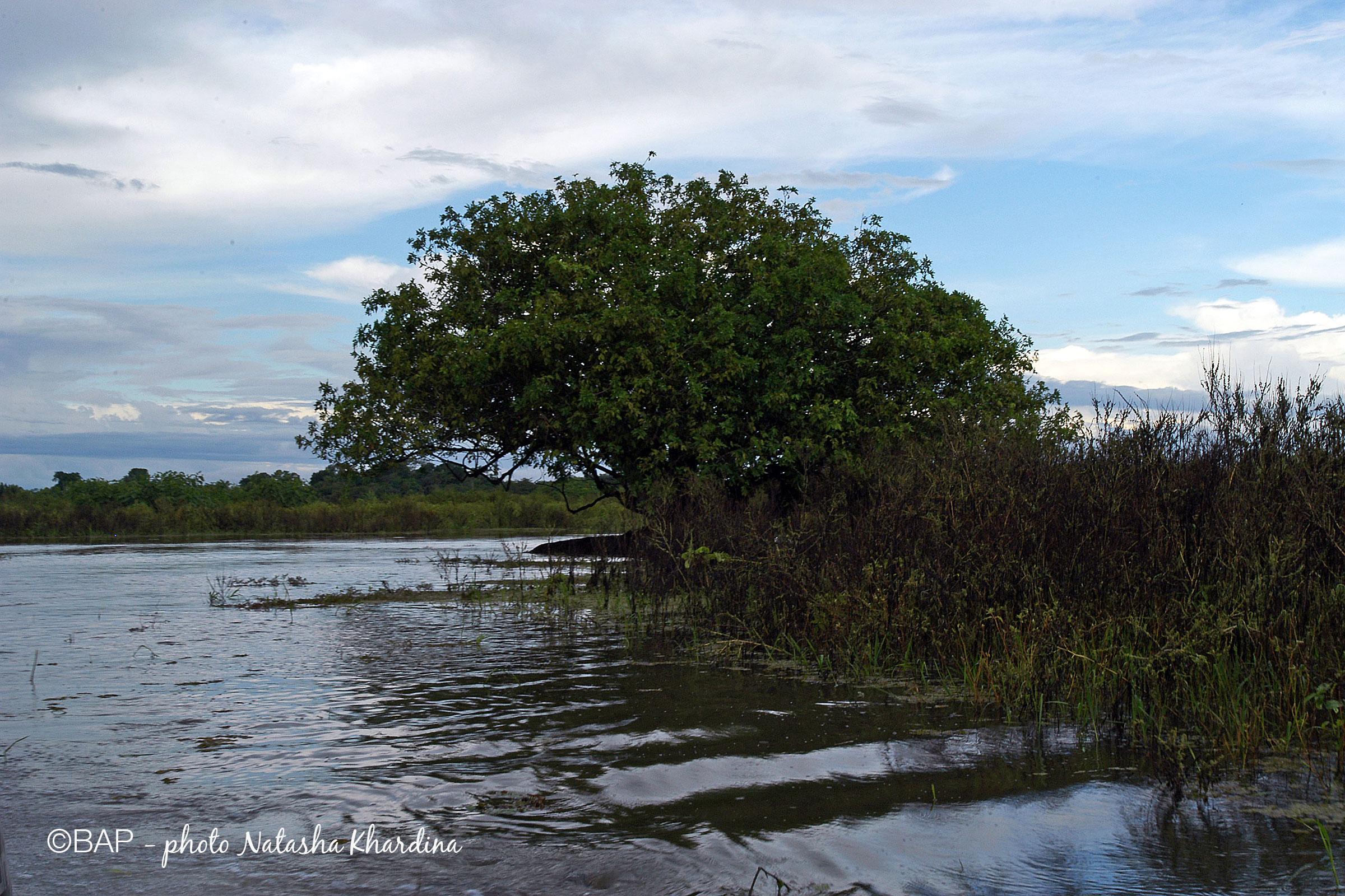 BIN Lago Cuipeua, Amazonas, Brazil. ©BAP, photo N.Khardina