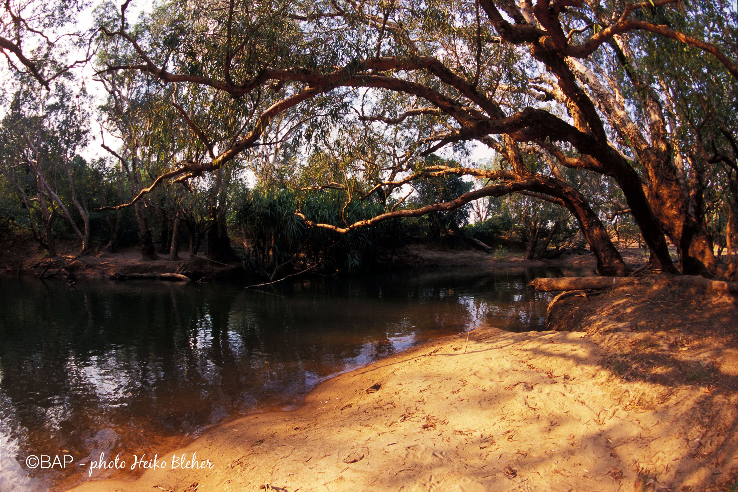 BIN Birdie Creek, Katherine River affluent, Northern Territories. ©BAP, photo H. Bleher
