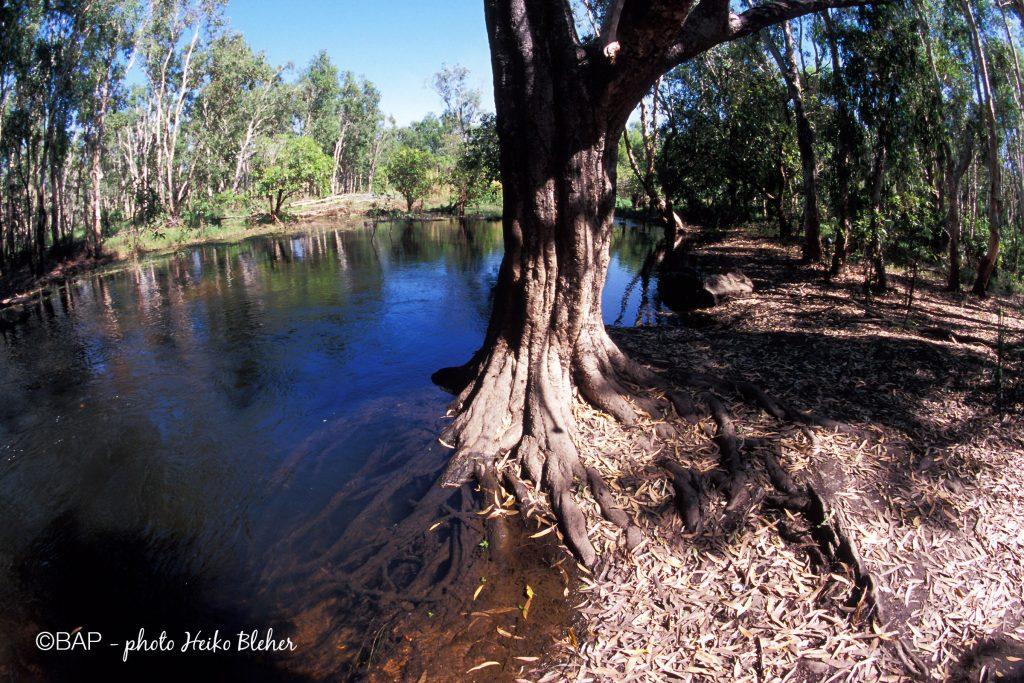 Plant Creek, Kakadu Creek, NT, Australia. ©BAP, photo H. Bleher