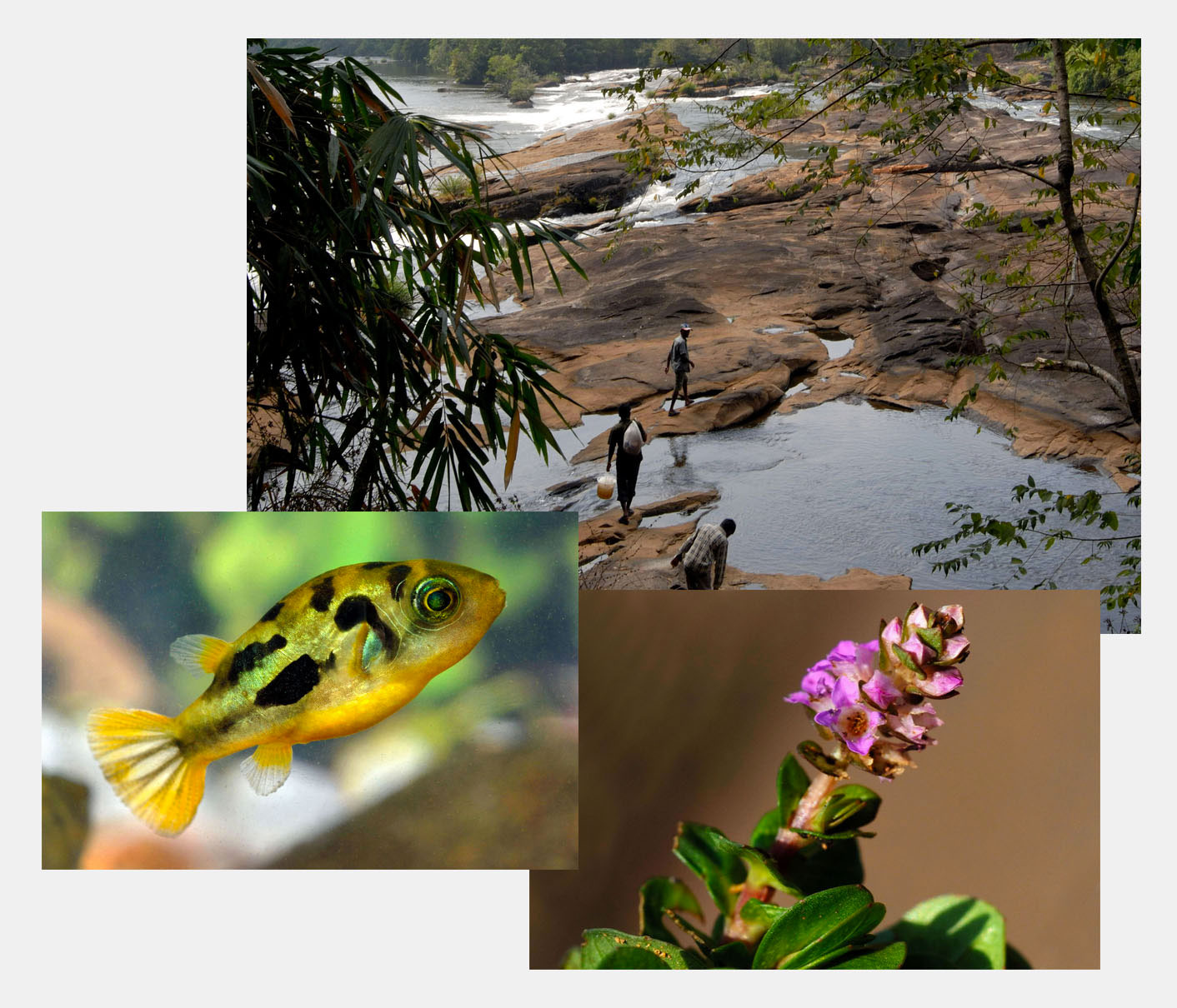 Biotope in Kerala, India
