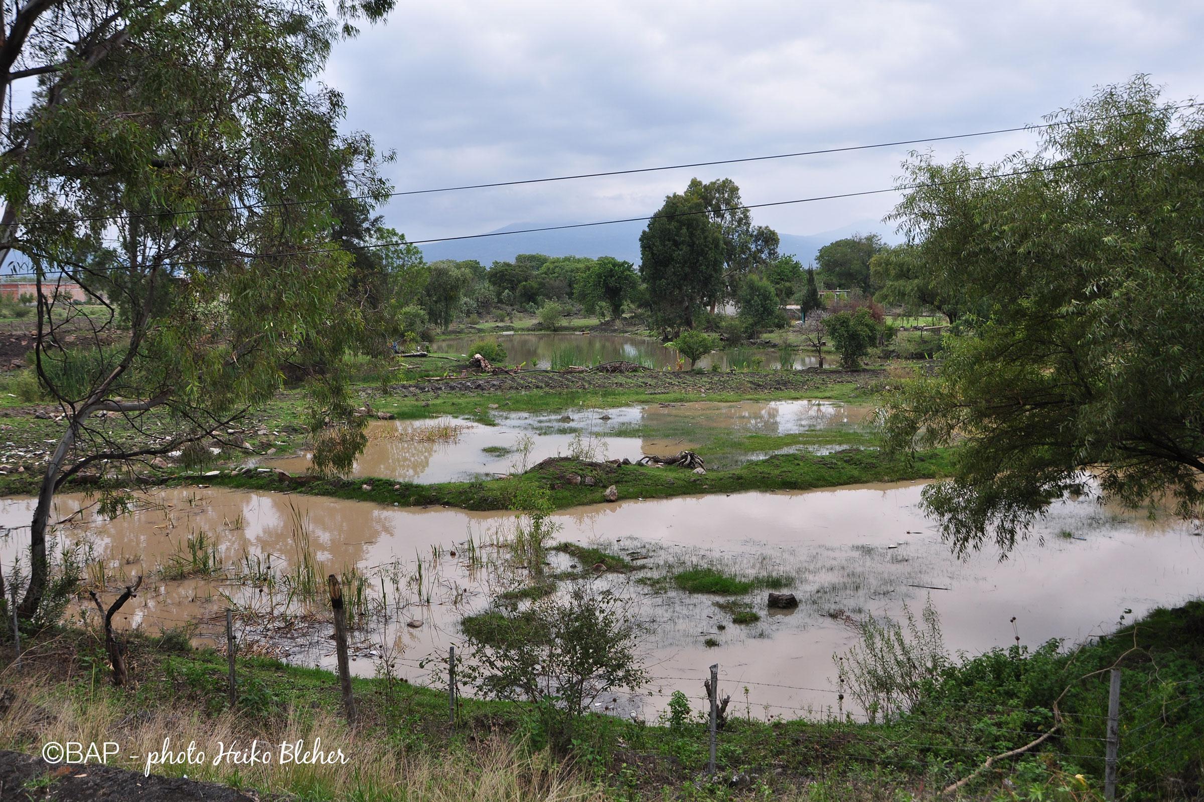 Muddy pond, La Mintzita, Mexico. ©BAP, photo H. Bleher