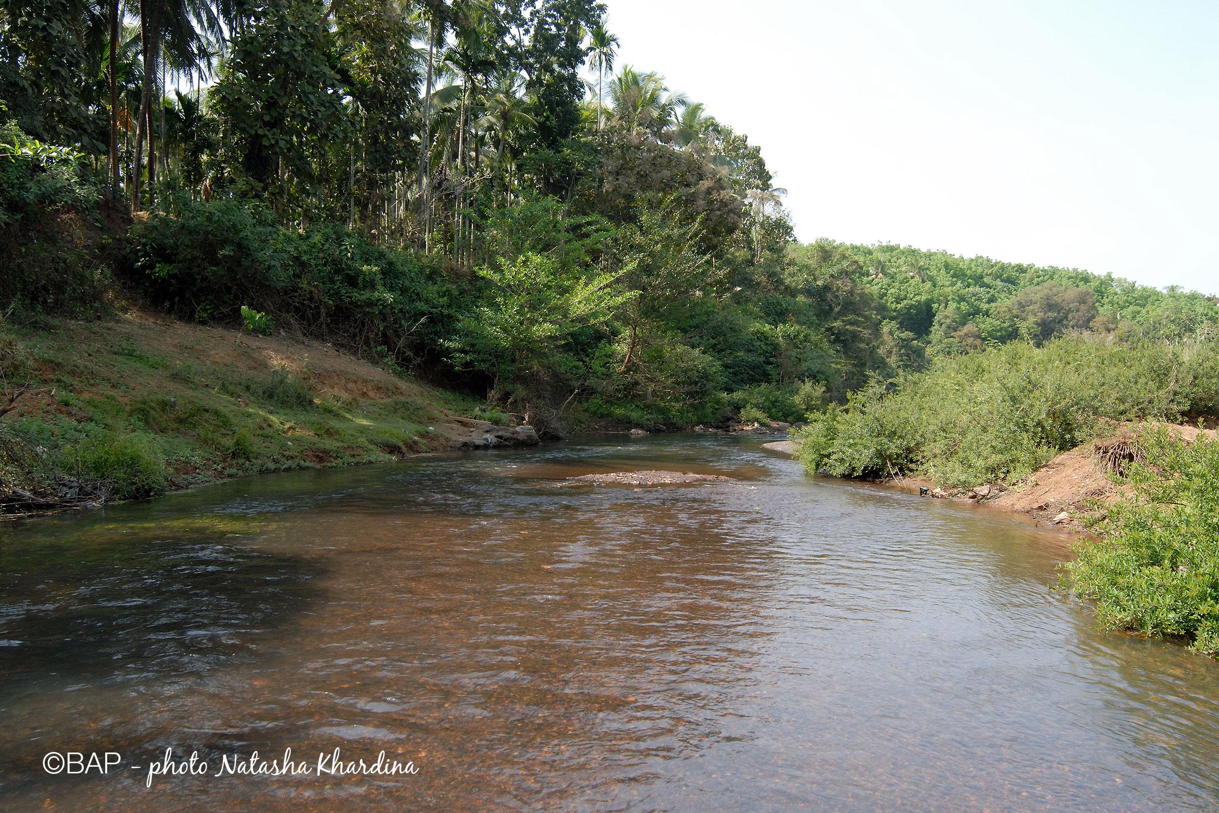 BIN Meruvambayi River, Kerala. ©BAP, photo N.Khardina