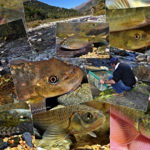 Fishes of Himalaya Foothills, India