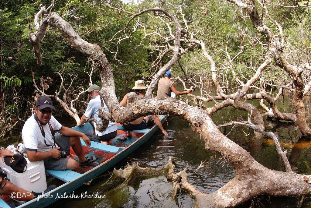 Rio Aracà, Rio Negro region. ©BAP, photo N. Khardina