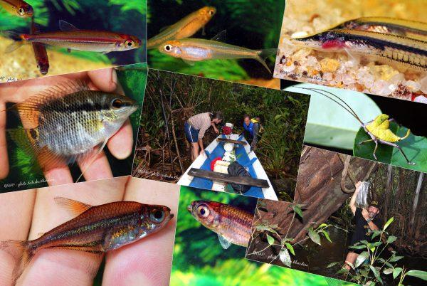 Exploring blackwaters of the Rio Aracà