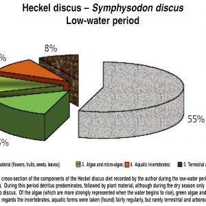 Symphysodon discus – Definitive Discus Guides