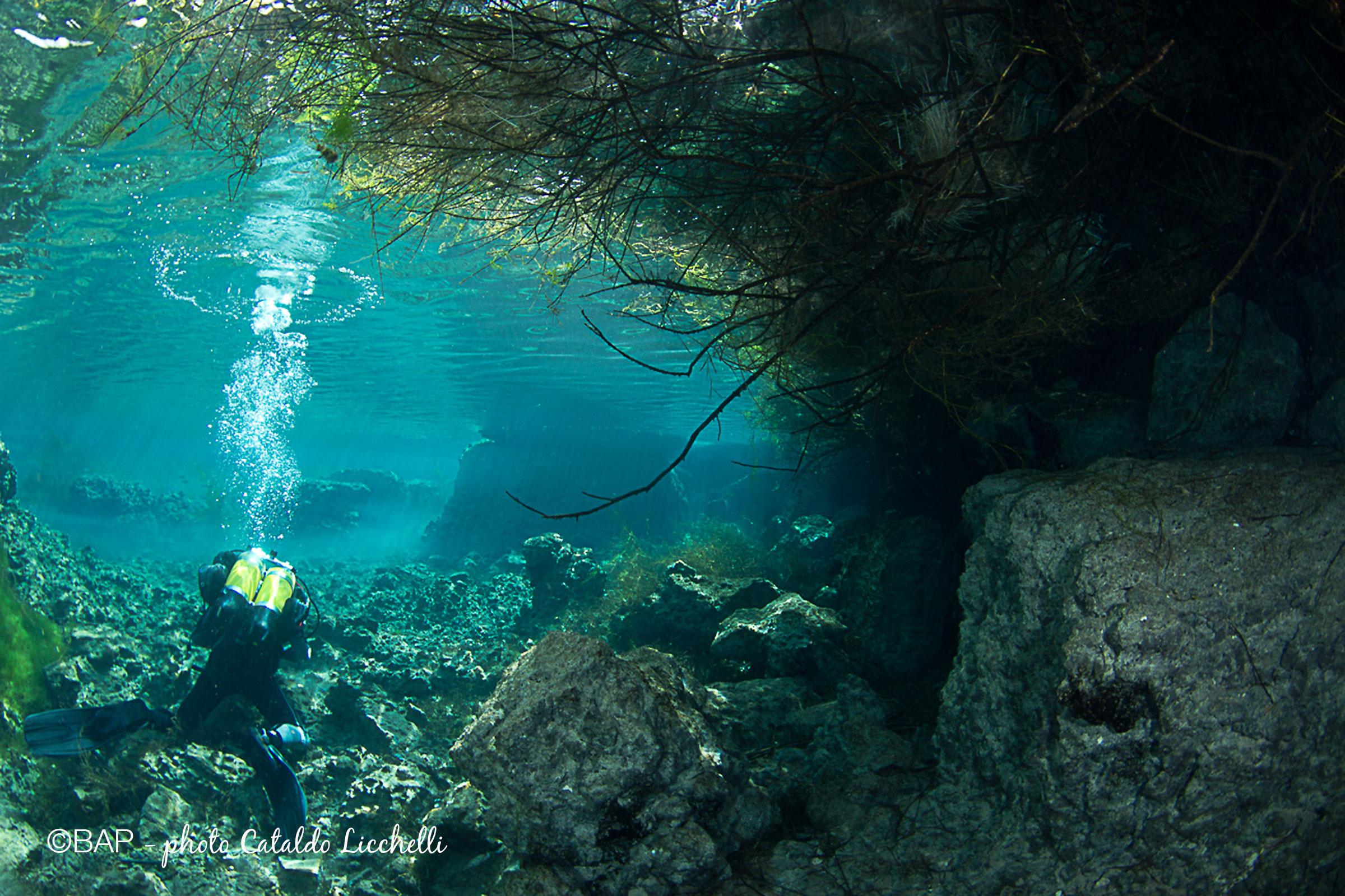 Palude di capitano, Puglia. ©BAP, photo Cataldo Licchelli