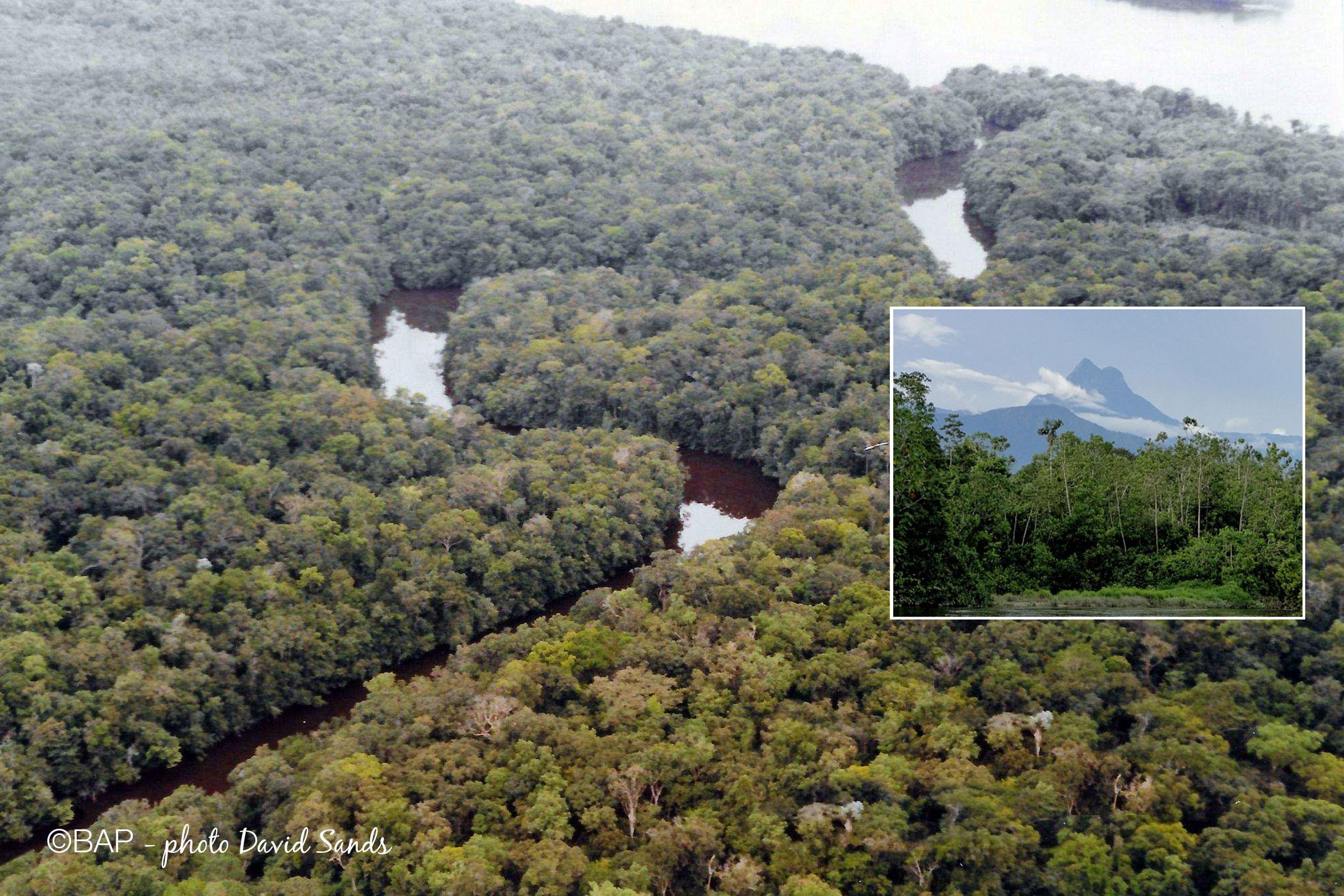 BIN, Rio Poranga, São Gabriel da Cachoeira, Amazonas. ©BAP, photo Magdalena Szubska