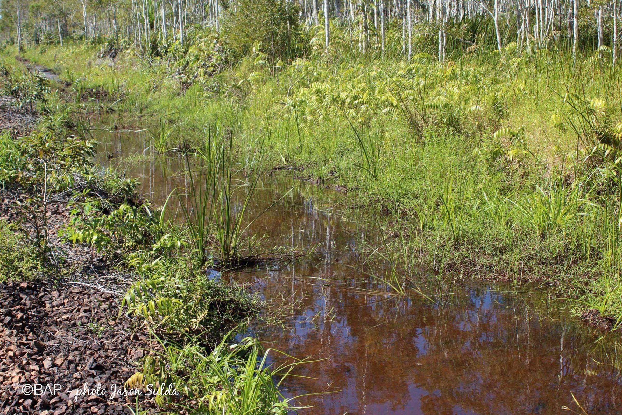BIN, Eubenangee Swamp, North Queensland. ©BAP, photo Jason Sulda