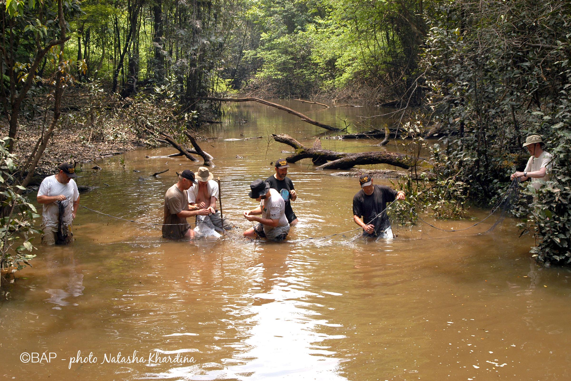 2nd expedition, Lago Aiapuà affluent, Brazil. ©BAP, photo N. Khardina