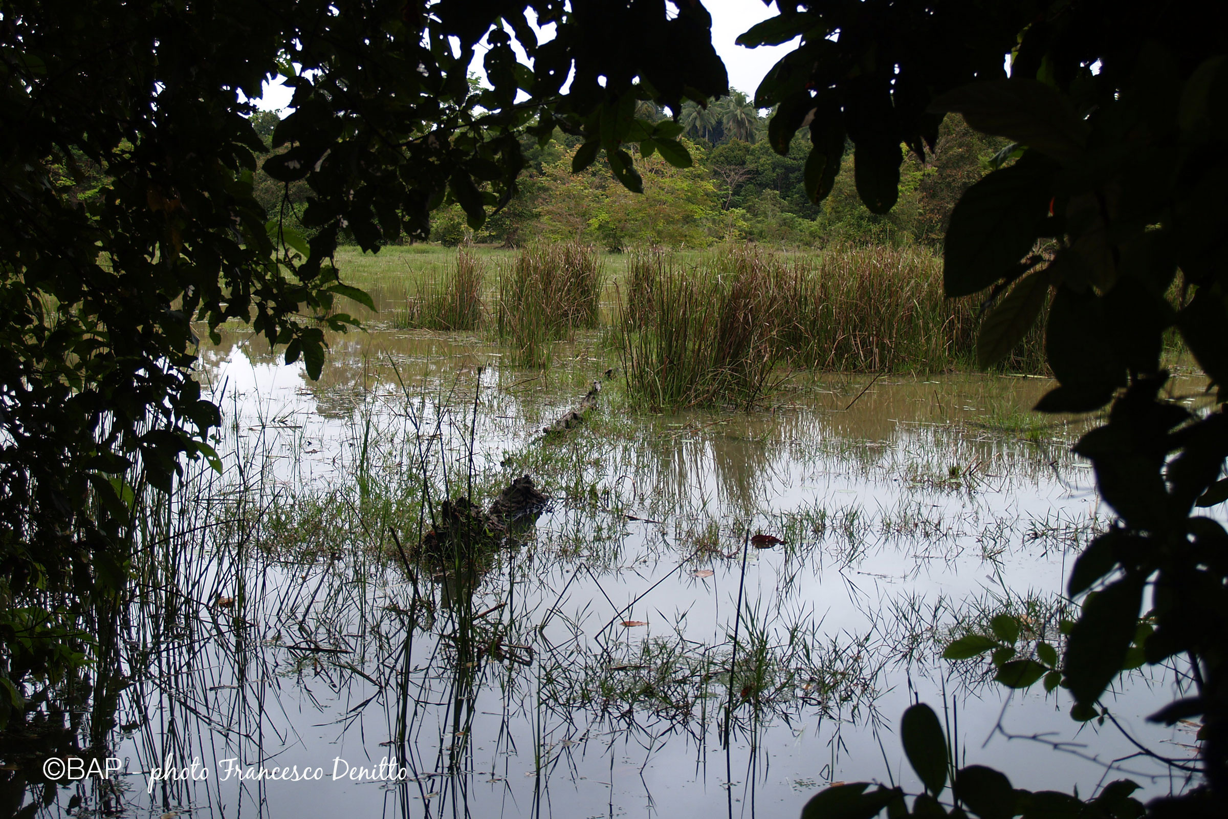 Sungai Pahang affluent, Malaysia. ©BAP, photo F. Denitto