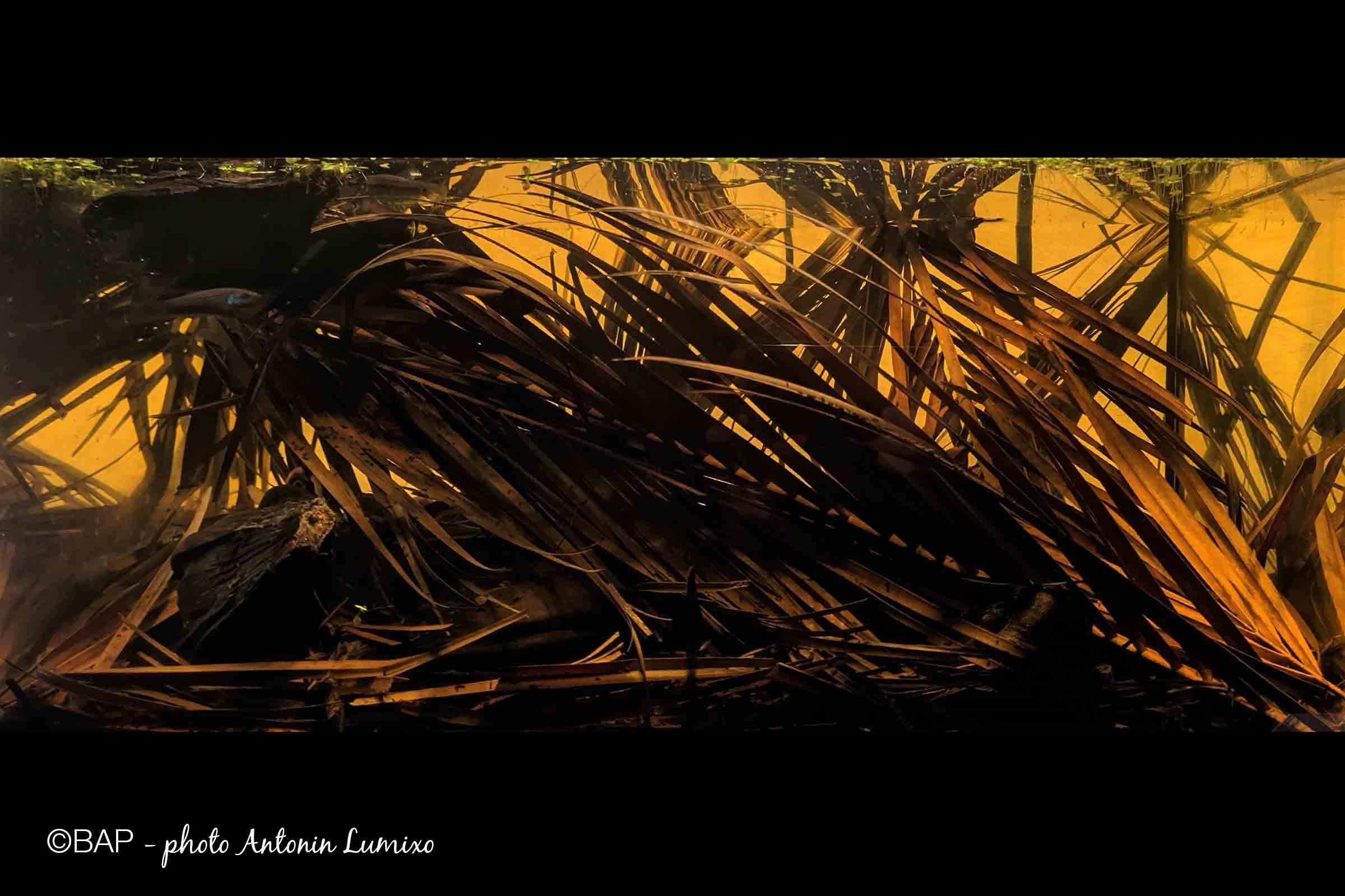 Nypa Brackish Swamp, near Ban Khom, Samut Sakhon, Thailand. ©BAP, photo Antonin Lumixo
