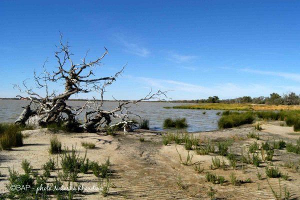 82-coongie-lake-nkhardina