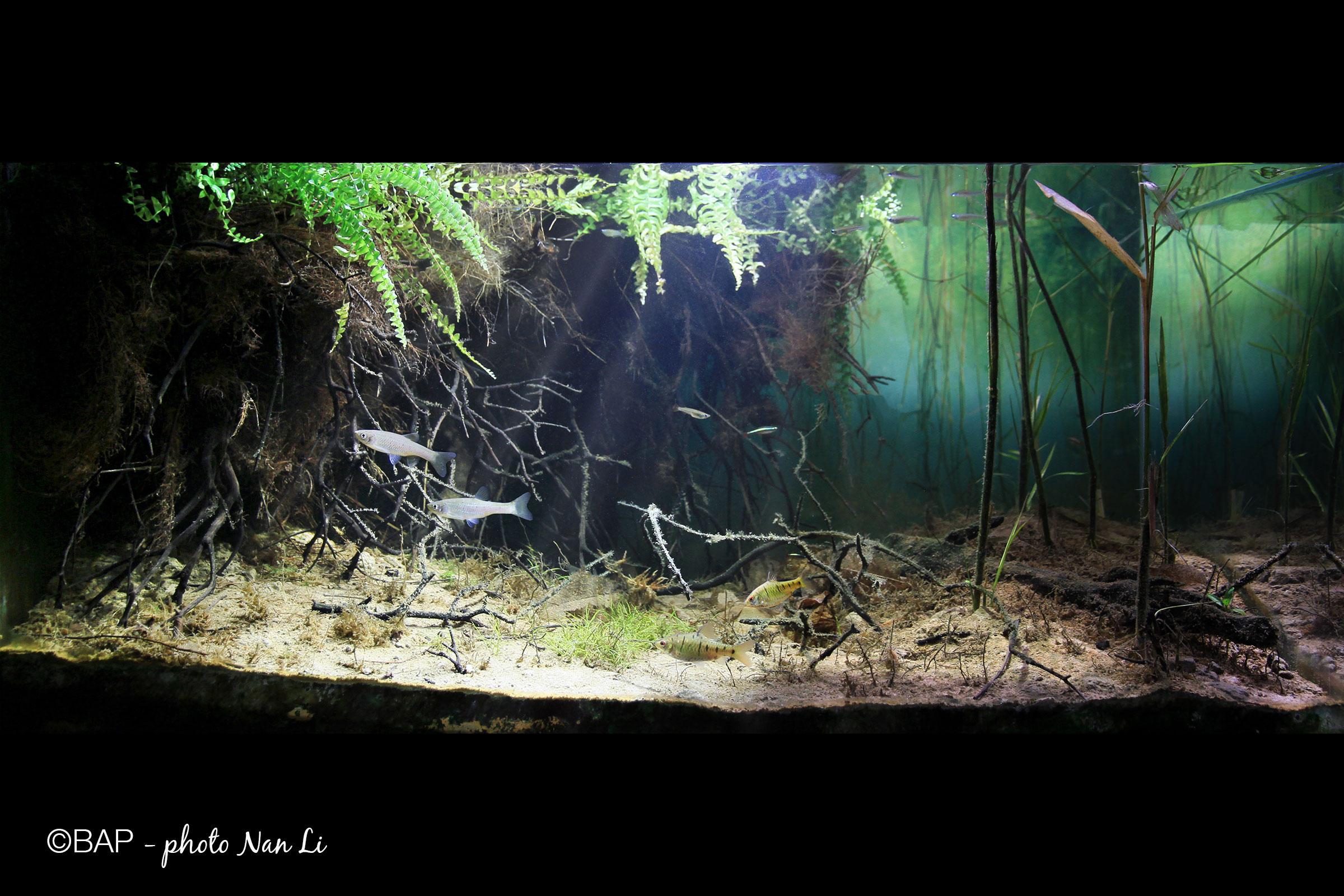 Unnamed swamp in Conghua, Guangzhou, China. Photo by Nan Li